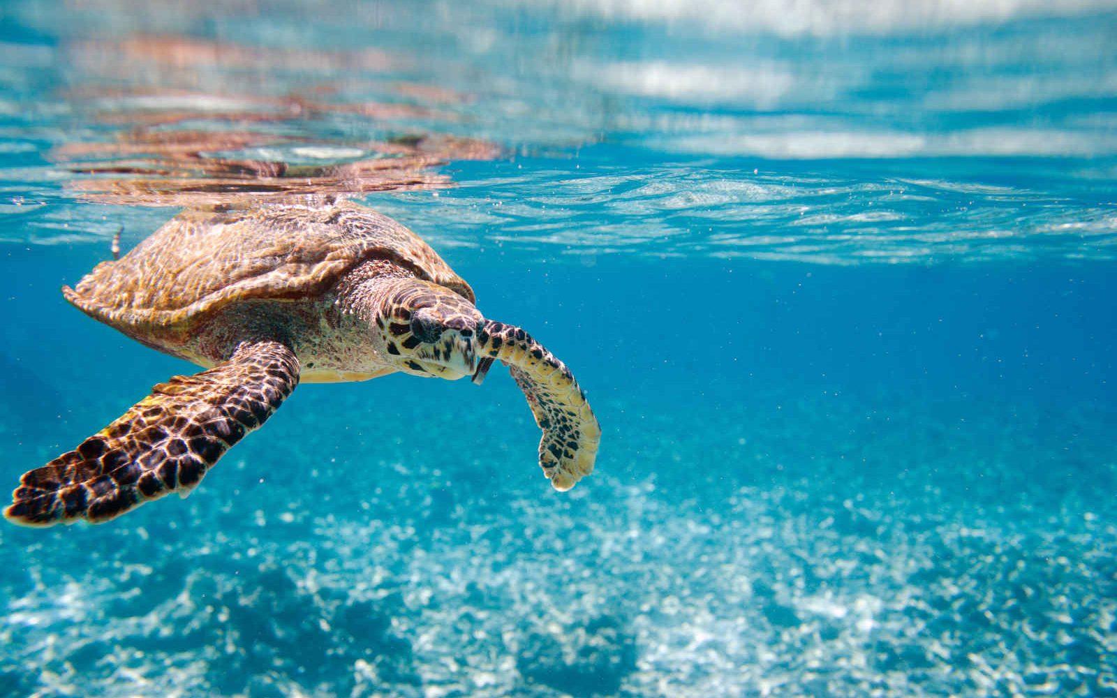 Tortue, plongée, Seychelles