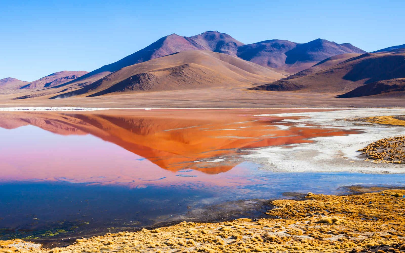 Laguna Colorada, Altiplano, Bolivie