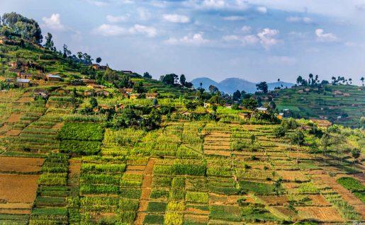 Plantations près de Nyungwe National Park, Rwanda