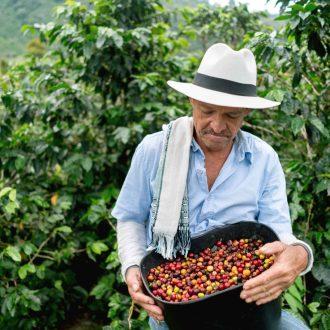 Récolte de café, Colombie