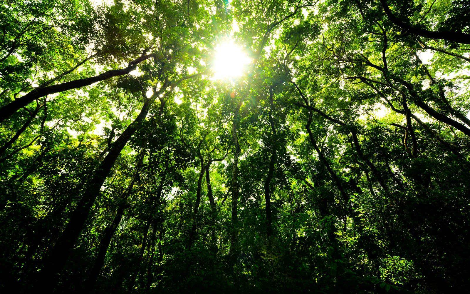 Forêt, Sri Lanka