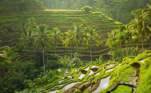 Rizières d'Ubud, Bali, Indonésie