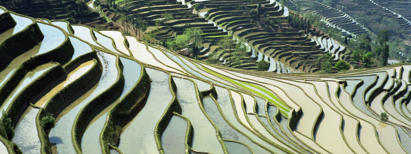 Rizières du Yunnan, Chine