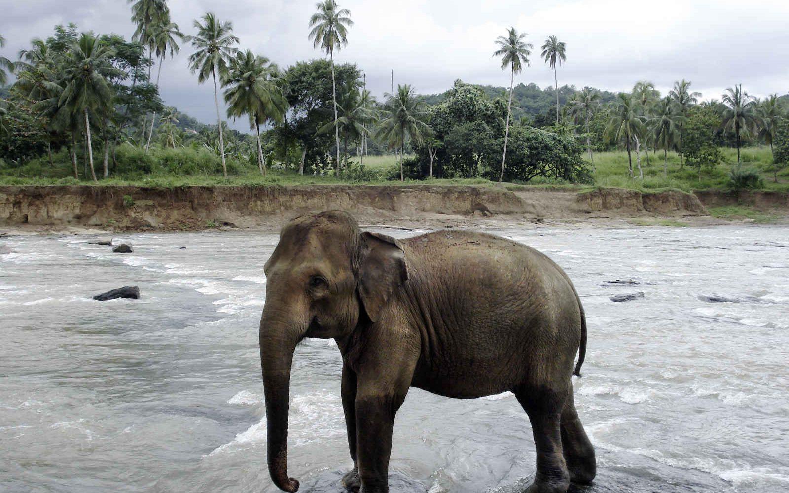 Elephant, Rivière, Sri Lanka