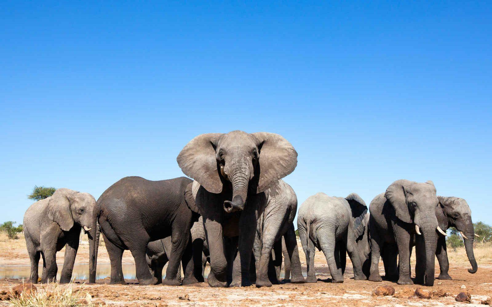 Harde d'éléphants, Afrique