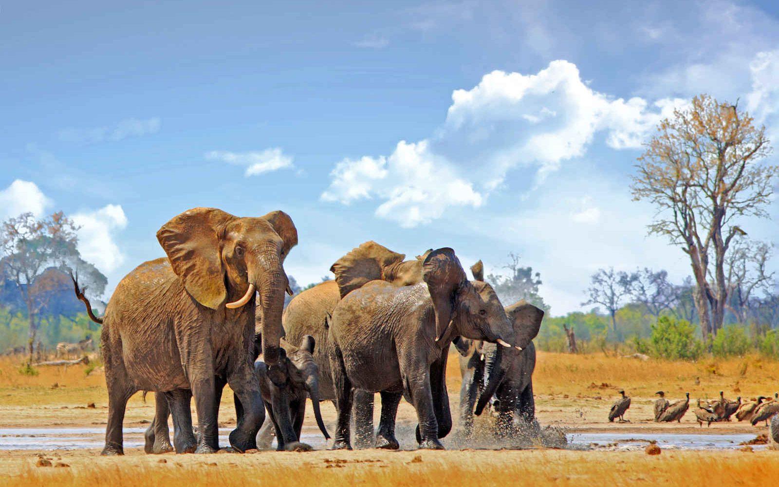 Elephants, Parc National Hwange, Zimbabwe