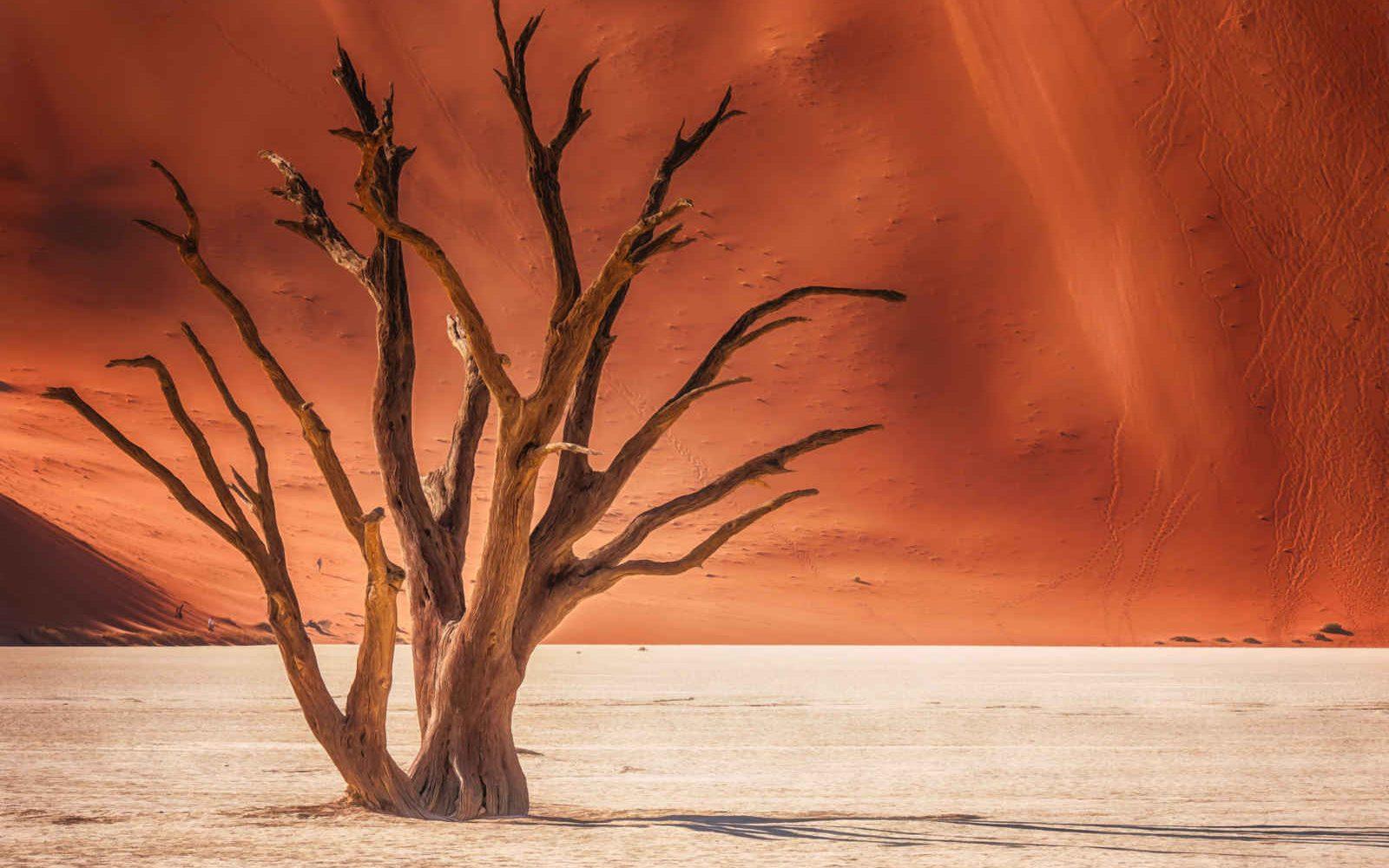 Dead Vlei, Désert du Namib, Namibie