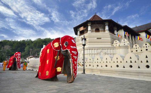 Temple, Elephants, Kandy, Sri Lank