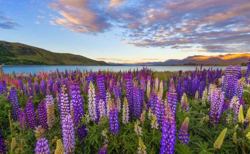 Lac Tekapo, Nouvelle-Zélande
